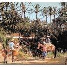 Tunisia GabesTunisia Gabes Les Oasis Mule Donkey Palms Africa Sc 352 356 Vtg Postcard 4X6d 4X6