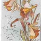 Glitter Name Sarah Stewart Embossed Daffodils Narcissus Vintage Postcard
