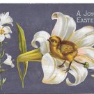 Easter Chick in a Lily 1910 Embossed Postcard