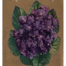 Motto Poem Vintage 1910 Postcard Flowers Deep Blue Violets on Gold Background