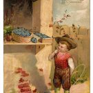 Birthday Greetings Boy Flower Stand Forget Me Nots Basket Embossed Postcard Germany