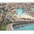 Washington DC Cherry Blossoms Vntg Postcard Potomac Park Riverside Drive