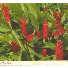 Hawaiian Red Ginger Flower 1969 Continental Postcard 4X6