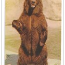 Alaskan Brown Bear Los Angeles Zoo Vintage Postcard