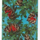 Butterfly Greece Rhodes Valley of the Butterflies Papillons Vintage 4X6 Postcard