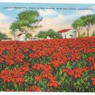 Largest Poinsettia Flower Field in the World San Diego CA Kropp Linen Postcard