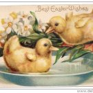 Embossed Easter IAP Postcard Ducklings in a Bowl of Water Narcissus ca. 1910 Germany