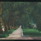 CA Famed Marengo Ave Pasadena California overhanging Pepper Trees Vintage Kashower Postccard