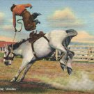 John Smith Leaving Snakes Western Cowboy Bronco Rodeo Curteich Linen Postcard
