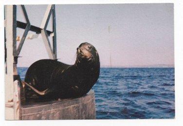 Seatlle WA Tillicum Village Blake Island State Marine Park Sea Lion Vntg Postcard 4X6