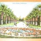 Vintage Palm Walk California Postcard