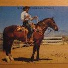 Vintage Lee's Cafe Sheridan Wyoming Quarter Horse Postcard
