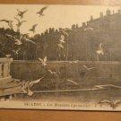 Vintage Lyon Les Mouettes Lyonnaises E.R. France Postcard