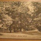 Vintage Oxford Broad Walk UK Postcard