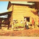 Vintage Stringing Tobacco Harvest Time Postcard