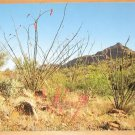 Vintage Springtime On The Desert Postcard
