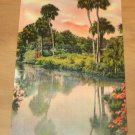 Vintage Tropical Beauty In Florida Postcard