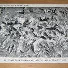 Vintage Greetings From Pymatuning Largest Lake PA Postcard