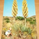Vintage California Yucca In Bloom Postcard
