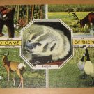 Vintage Wild Game Of The West Postcard