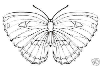 Collection of BUTTERFLIES Printable Images 105 Pages