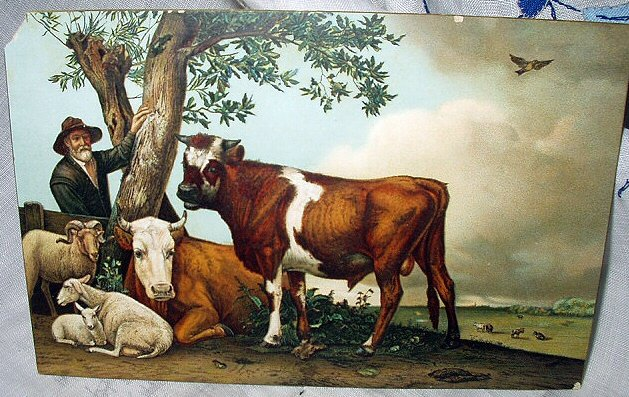 Unused Postcard-STENGEL-Brown Cows,Sheep Resting under tree
