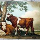 Unused Postcard-STENGEL-Brown Cows,Sheep Resting under tree
