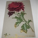 1900s Germany Postcard-Happy Birthday-Lovely Raised Velvet Texture Scarlett Mum Flower