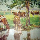 Herd of Grazing & Drinking Cows,Shade of Tree-Vintage Lithograph print
