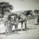 Thoroughbred Breeding of Horses-Edwin Megargee Original Vintage Lithograph Print