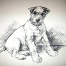 Airedale Dog in Sepia Tone Vintage Lithograph-Please I've Come-Backside Otter Hounds