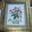 Cecil Golding,Blossom Headed Green Parakeet Bird,Vintage Framed lithograph print
