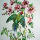 Cecil Golding,Blossom Headed Green Parakeet Bird Vintage lithograph print Suitable for framing