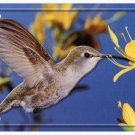 LP-1201 Humming Bird License Plate