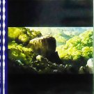 1 left- Movie Film #20- 6 Frames- Okkotonushi Wild Boar God on Cliff - Mononoke - Ghibli (real film)
