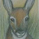 ACEO Deer Fawn wildlife art magnet