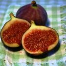 Brown Sugar Fig/Vanilla  (bathsalt 8oz)
