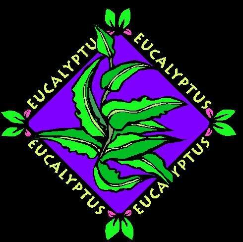 Eucalyptus Pure Grade Essential Oil Aromatherapy