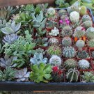 "Succulent & Cactus Plants 3 Live Potted Plants ""FREE"" Shipping!!!"