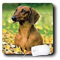 Dogs Dachshund - Smooth Dachshund - Mouse Pads