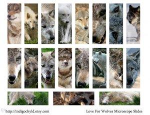 Love of Wolves Digital Microslide Collage Sheet PDF