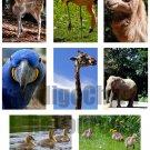 Zoo ATC Digital Collage Sheet JPG