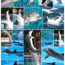 Dolphins Digital Collage Sheet JPG