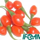 1000+ IFOAM Certified Organic Goji Berry Seeds