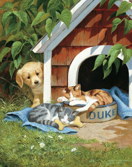 Cat Nap - 500 piece SunsOut puzzle - for Ages 12+