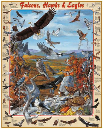 Falcons, Hawks & Eagles - 1,000 piece White Mountain puzzle - for Ages 12+