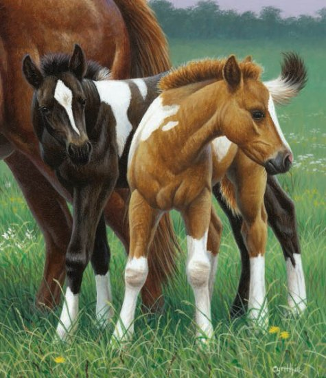 Two Foals - 550 piece SunsOut puzzle - for Ages 12+