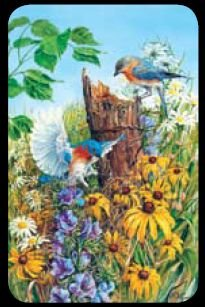 Nesting Bluebirds - Bridge Playing Cards - NEW