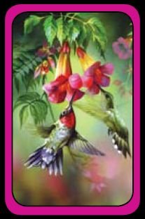 Summer Hummer - Bridge Playing Cards - NEW