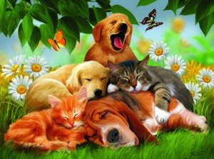 SleepyHeads - 100 piece SunsOut Mini puzzle